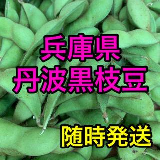 今が旬! 丹波黒枝豆 約800g(野菜)