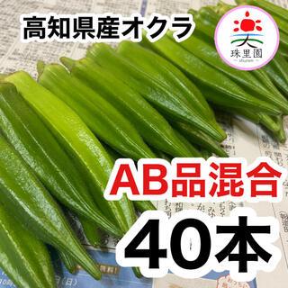 高知県産 オクラ おくら 40本 即購入OK 産地直送 鮮度抜群 夏野菜(野菜)