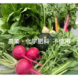九州産 無農薬 野菜セット(野菜)