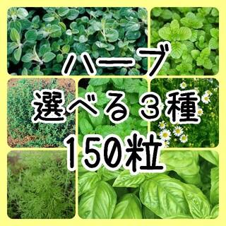 【ハーブの種】選べる3種  150粒 種子(その他)