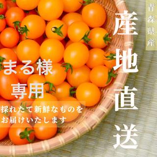 イエローミミ3kg 【まる様専用】採れたて☘️産地直送いたします(野菜)