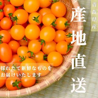カラートマト 2kg  イエローミミ 採れたて直送 トマト嫌い お子様にも!(野菜)
