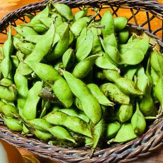 丹波篠山産 黒大豆枝豆 4kg(野菜)