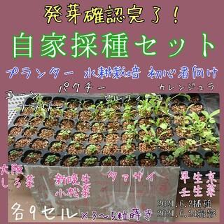 自家採種 固定種 在来種 有機種子 野菜の種 ハーブの種 エディブルフラワー 種(野菜)