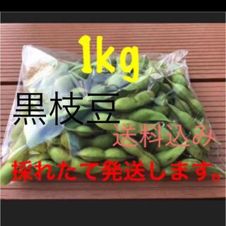 黒枝豆 1kg  採れたて発送します。(野菜)