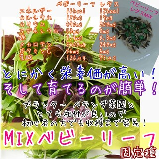 ベビーリーフ レタスMIX 固定種 野菜の種 種子 種 家庭菜園 サラダ(野菜)