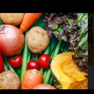 大人気 北海道 お試し 無農薬 100サイズ 野菜詰め合わせセット(野菜)