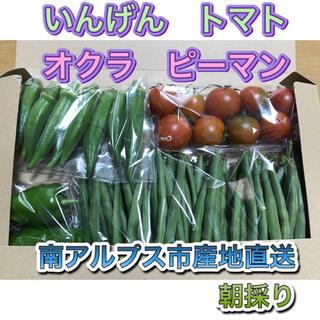 農家直送☆丸ざやいんげん☆ミニトマト☆オクラ☆ピーマン ネコポス(野菜)