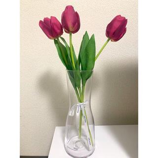 Francfranc - 造花(Francfranc)