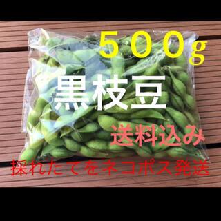 黒枝豆 500g  採れたて発送します。(野菜)