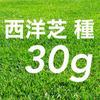 西洋芝の種 トールフェスク 30g種子グランドカバー。《1平米》芝生緑化(その他)