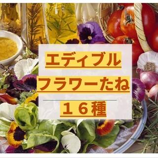 エディブルフラワー 種16種 ビオラ(その他)