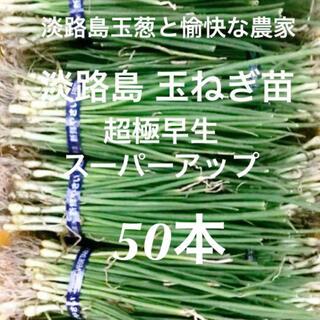淡路島 玉ねぎ苗 超極早生 50本 たまねぎ苗 玉葱苗 タマネギ苗(野菜)
