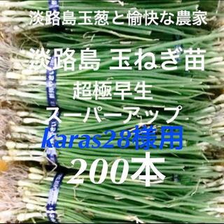 karas28様用 淡路島 玉ねぎ苗 超極早生 200本 たまねぎ苗 玉葱苗(野菜)