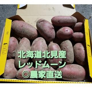 北海道 北見産 新 じゃがいも レッドムーン ◎農家直送 1.7kg(野菜)
