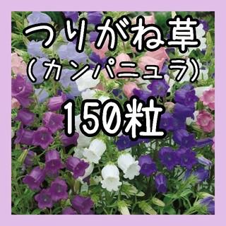 【つりがね草の種】150粒 種子 カンパニュラ(その他)