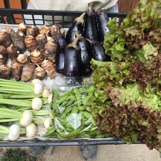無農薬減農薬野菜セット(野菜)