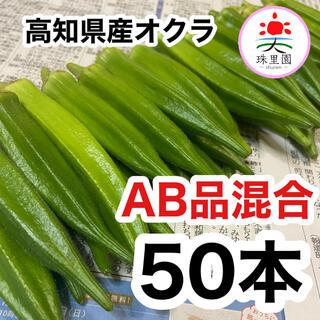 高知県産 オクラ おくら 50本 即購入OK 産地直送 鮮度抜群 夏野菜(野菜)