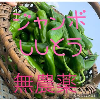 北海道産 無農薬 ジャンボししとう 1kg(野菜)