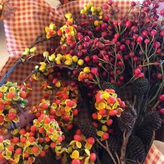 10月11日収穫 野ばら、ヤシャブシ&ツルメモドキの詰め合わせBOX(ドライフラワー)