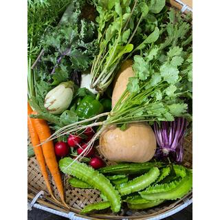 【綾善farm】農薬不使用の野菜セットM 8〜10品