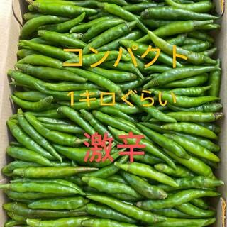 激辛唐辛子コンパクト(野菜)