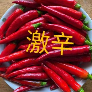 激辛無農薬唐辛子50本(野菜)