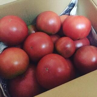 産地直送 減農薬トマト 桃太郎 約3kg 12個~ はねだし 訳あり(野菜)