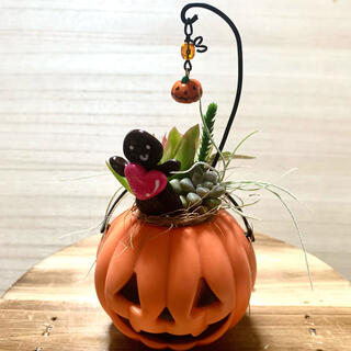 〜そのまま飾れる〜多肉植物寄せ植え(ハンドメイド、ハロウィン)(その他)