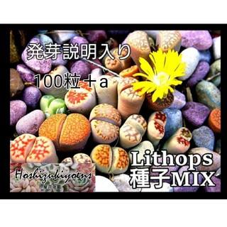 【今が蒔時】リトープス ミックス 種子 100粒 発芽説明入り(その他)