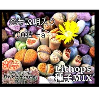 【今が蒔時】リトープスミックス種子100粒+a 発芽説明入り(その他)
