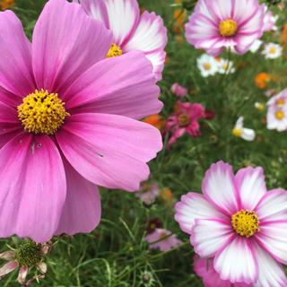 COSME DECORTE - コスメデコルテ リフトディメンションセラム