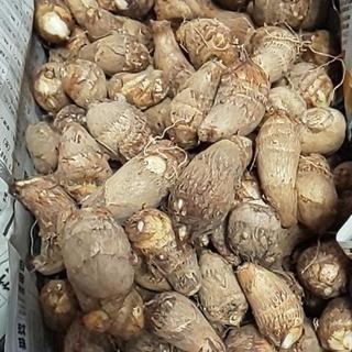 里芋 約5㌔ 農薬不使用(野菜)
