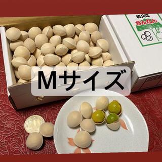 名産地愛知県稲沢市祖父江銀杏 Mサイズ(野菜)