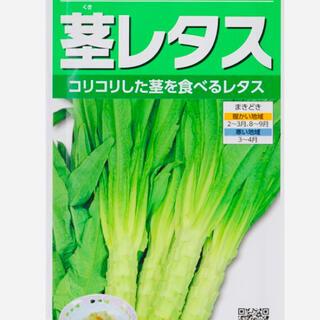 山くらげ(ステムレタス)  茎レタス 莴苣。野菜種    30粒(野菜)