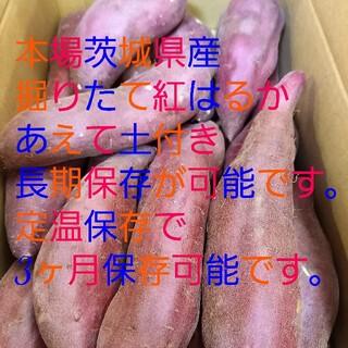 サツマイモ 紅はるかMLサイズ茨城産10キロ掘りたて減農薬土付最高級特A品質(野菜)