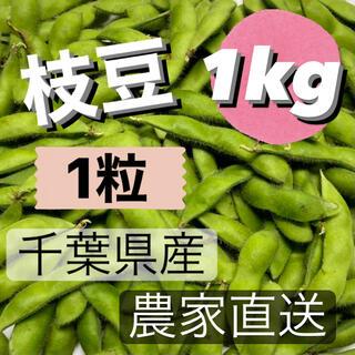 枝豆 1粒 1kg 千葉県産 農家直送(野菜)