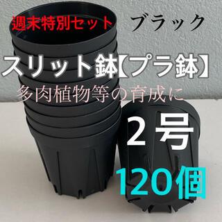 週末特別セット‼️スリット鉢2号直径6センチ 120個‼️(プランター)