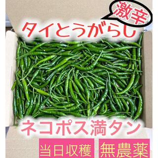 ★激辛唐辛子★新鮮野菜★当日収穫★(野菜)