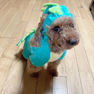 ハロウィン 犬服 ドッグウェア 着ぐるみ コスプレ 犬 猫 服 恐竜