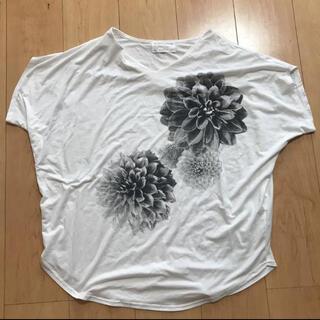 antiqua - アンティカtシャツ