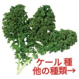 野菜種☆ケール☆変更→カラフル人参 春菊 芽キャベツ 黒キャベツ ビーツ(野菜)