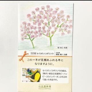セイヨウノコギリソウ 種子(その他)