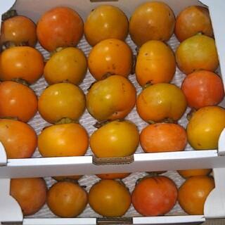 訳あり 富有柿 40個 硬め6キロ以上