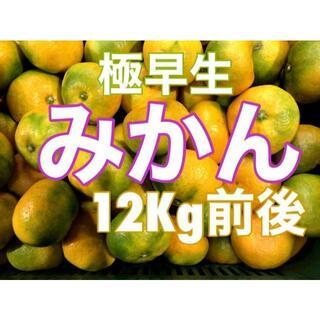 RK12M5 大特価!愛媛県産 極早生みかん 約12Kg前後 訳あり 蜜柑