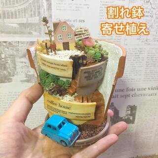 多肉植物の寄せ植え 割れ鉢タイプ Coffee house