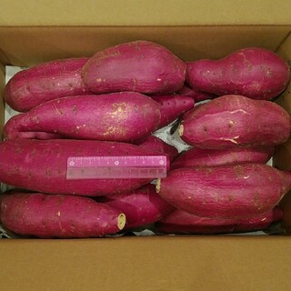F 千葉県産 シルクスイート さつまいも サツマイモ 約5.9キロ