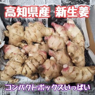 高知県産 土付き新生姜コンパクト(野菜)