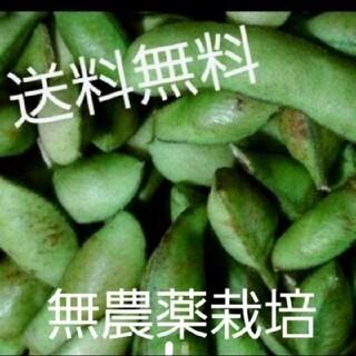 無農薬野菜 枝豆(黒埼茶豆)(野菜)