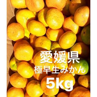 愛媛県 極早生みかん 柑橘 5kg(フルーツ)